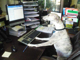 Our Lead Customer Service Agent, Bella, awaits you!